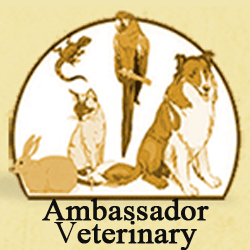 Ambassador Veterinary Hospital  Social Media Ambassador Veterinary